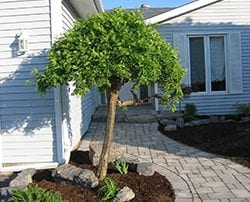 Curvy walkway with a small tree for decoration