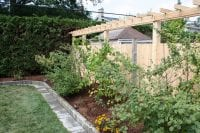 Small garden near a white cedar fence with lattice